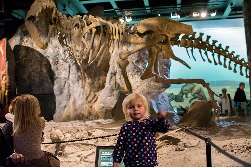 Lola-T-rex-Naturhistorsika