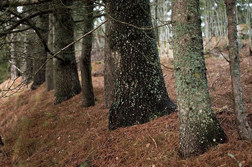Trädstammar-på-rad-Omne