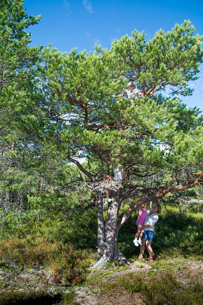 Kompassberget Klätterträd