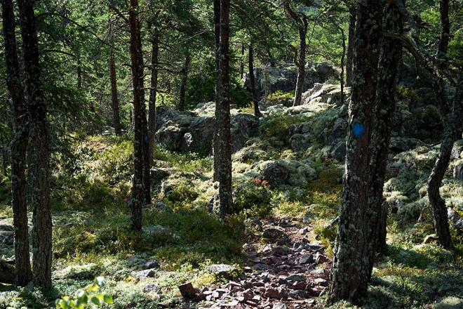 Vandringsled_Skvalpudden_skog